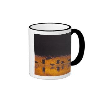 Sandhill Cranes Grus canadensis) Bosque Del 2 Coffee Mugs