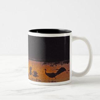 Sandhill Cranes Grus canadensis) Bosque Del 2 Coffee Mug