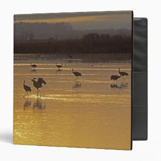 Sandhill Cranes Grus canadensis) Bosque Del 3 Ring Binder