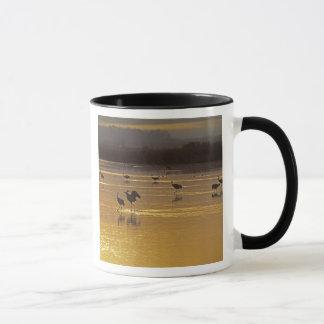 Sandhill Cranes Grus canadensis) Bosque Del Mug