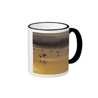 Sandhill Cranes Grus canadensis) Bosque Del Coffee Mugs