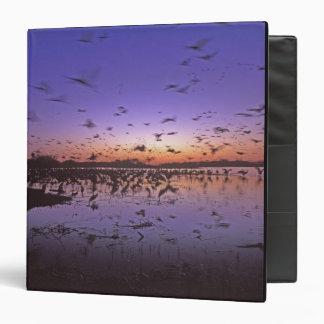 Sandhill Cranes Grus canadensis) Platte 2 Binder