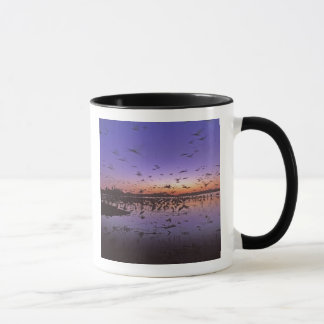 Sandhill Cranes Grus canadensis) Platte 2 Mug