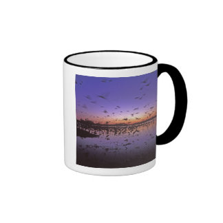 Sandhill Cranes Grus canadensis Platte 2 Coffee Mugs