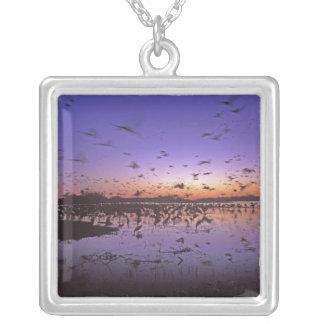 Sandhill Cranes Grus canadensis) Platte 2 Necklace