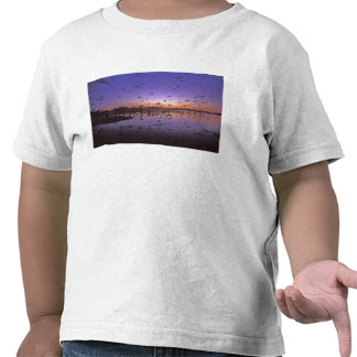 Sandhill Cranes Grus canadensis) Platte 2 Shirt