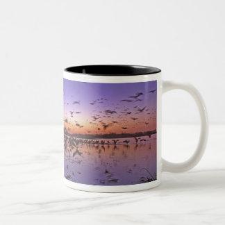 Sandhill Cranes Grus canadensis) Platte 2 Two-Tone Coffee Mug
