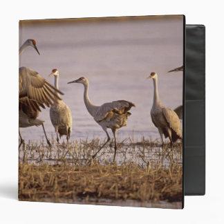Sandhill Cranes Grus canadensis) Platte Vinyl Binder