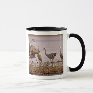 Sandhill Cranes Grus canadensis) Platte Mug
