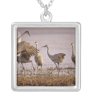 Sandhill Cranes Grus canadensis) Platte Silver Plated Necklace