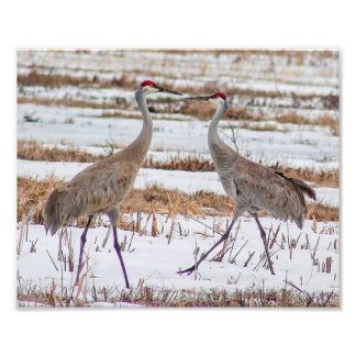 Sandhill Cranes in Snow Photography Print