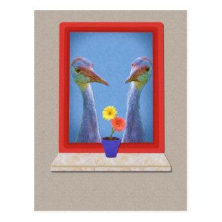 Sandhill Cranes la postal