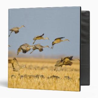 Sandhill cranes land in corn fields vinyl binders
