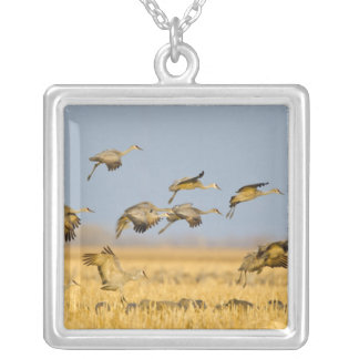 Sandhill cranes land in corn fields square pendant necklace