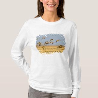 Sandhill cranes land in corn fields T-Shirt