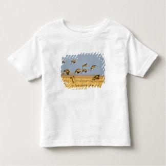 Sandhill cranes land in corn fields toddler t-shirt
