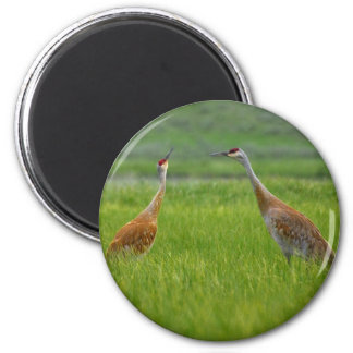 Sandhill Cranes Magnets