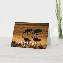 Sandhill Cranes, Merry Christmas Holiday Card
