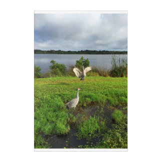 SandHill Cranes on the Little Manatee River Acrylic Print