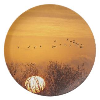 Sandhill cranes silhouetted aginst rising sun dinner plate