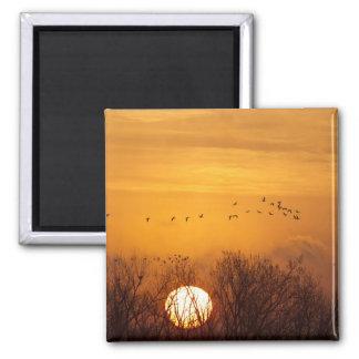 Sandhill cranes silhouetted aginst rising sun fridge magnets