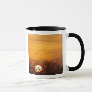 Sandhill cranes silhouetted aginst rising sun mug