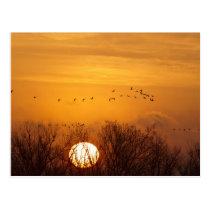 Sandhill cranes silhouetted aginst rising sun postcard