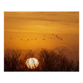 Sandhill cranes silhouetted aginst rising sun poster
