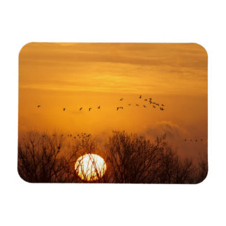 Sandhill cranes silhouetted aginst rising sun magnets