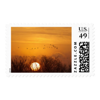 Sandhill cranes silhouetted aginst rising sun stamp