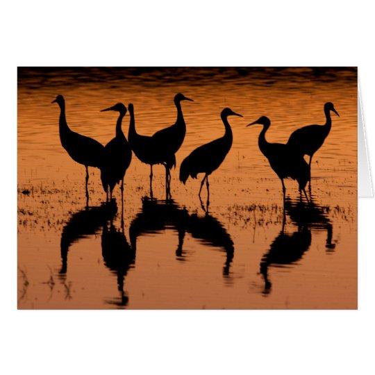 Sandhill Cranes Silhouettes - Party Invitation