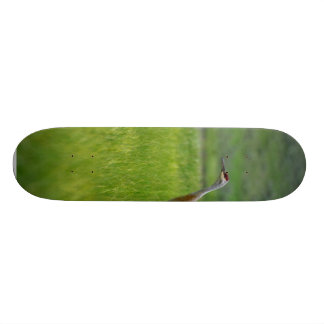 Sandhill Cranes Skate Board Deck