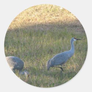Sandhill Cranes Sticker