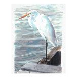 Sandhilll crane in water. personalized letterhead