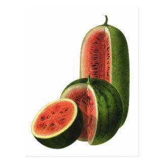 Sandías orgánicas de la fruta de la comida del vin tarjetas postales