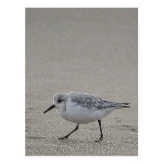 Sandling at Horsfall Beach, Oregon Postcard