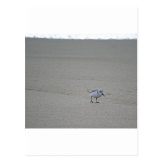 Sandling at Horsfall Beach Postcard