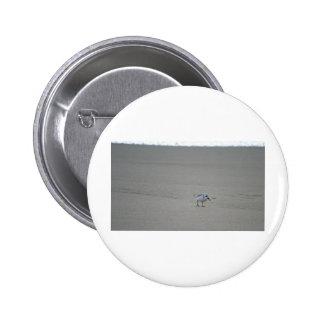 Sandling en la playa de Horsfall Pin