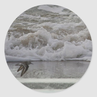 Sandling in Flight, Horsfall Beach, OR Classic Round Sticker