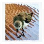 """Sandpiper at the Beach 5.25"""" Square Invitation Card"""