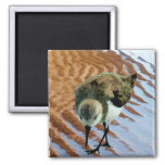 Sandpiper at the Beach Magnets
