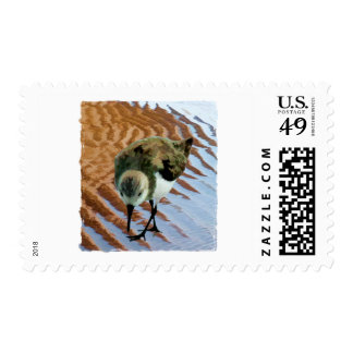 Sandpiper at the Beach Postage Stamp
