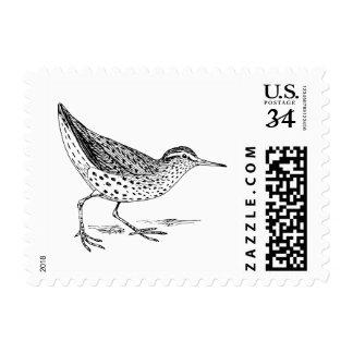 Sandpiper Bird Art Postage Stamp