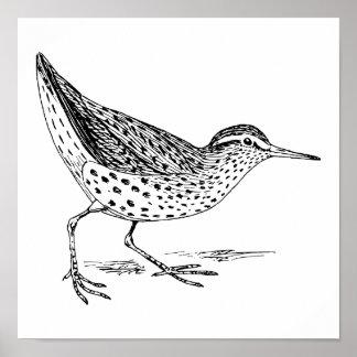 Sandpiper Bird Art Poster