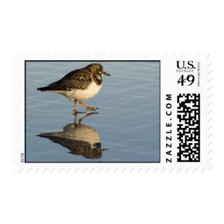 Sandpiper Bird Postage