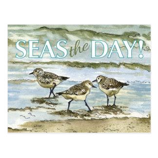 Sandpiper birds beach watercolor postcard