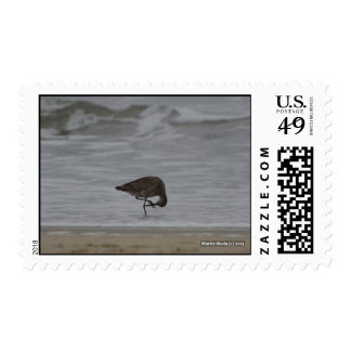 Sandpiper Bows Postage Stamp