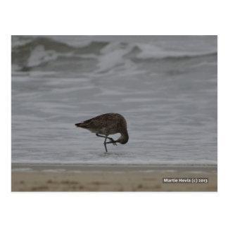 Sandpiper Bows Postcard