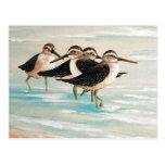 Sandpiper Family Postcards