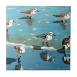 """Sandpiper III Ceramic Tile<br><div class=""""desc"""">I&#39;m a fine artist and mainly paint watercolor and oil painting.</div>"""